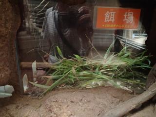 ハダカデバネズミの画像 p1_33